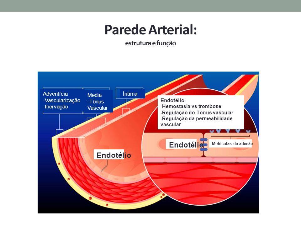 Parede Arterial: estrutura e função Adventícia -Vascularização -Inervação Media -Tônus Vascular Íntima Endotélio -Hemostasia vs trombose -Regulação do