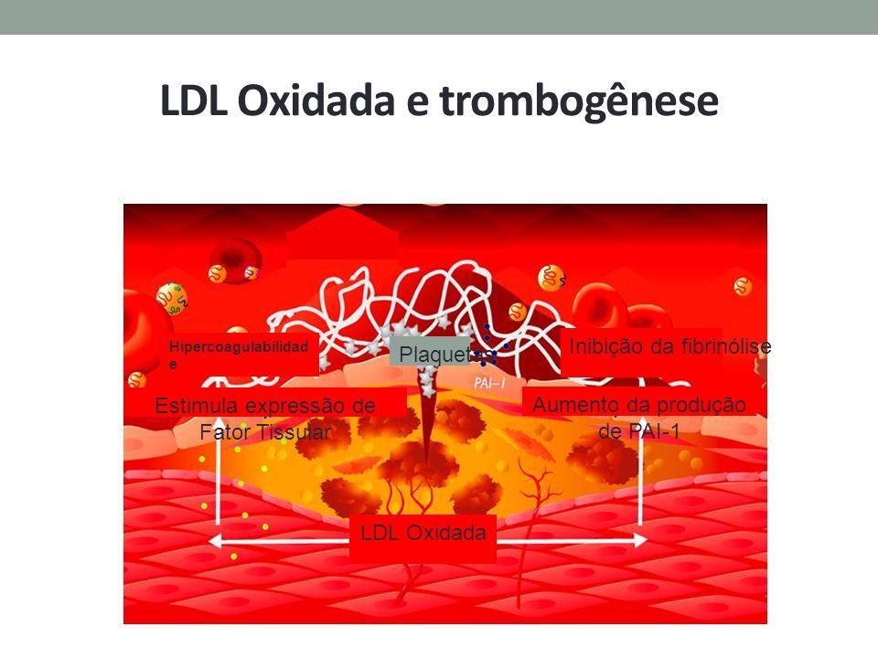 LDL Oxidada e trombogênese Hipercoagulabilidad e Inibição da fibrinólise LDL Oxidada Estimula expressão de Fator Tissular Aumento da produção de PAI-1