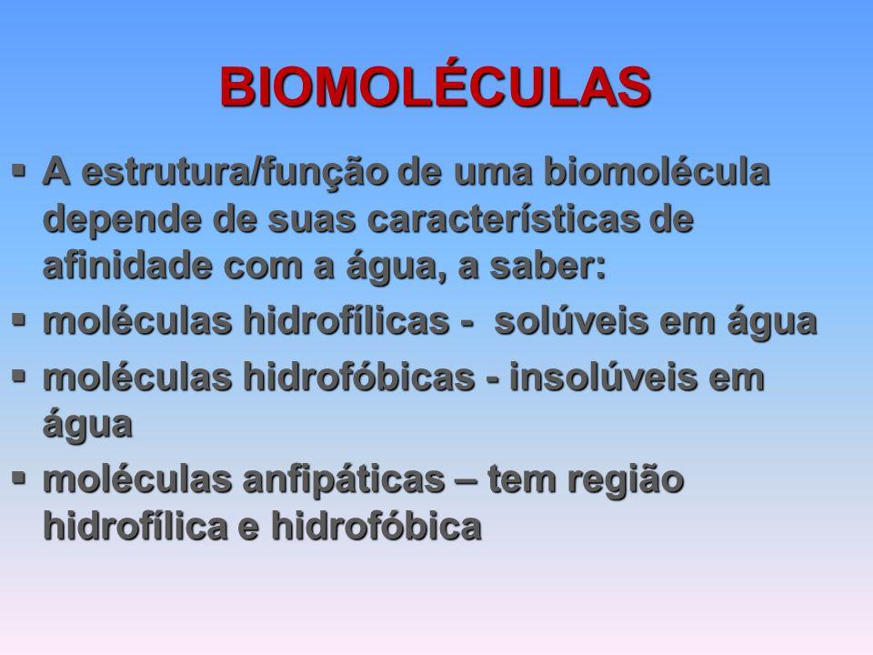 BIOMOLÉCULAS  A estrutura/função de uma biomolécula depende de suas características de afinidade com a água, a saber:  moléculas hidrofílicas - solúveis em água  moléculas hidrofóbicas - insolúveis em água  moléculas anfipáticas – tem região hidrofílica e hidrofóbica