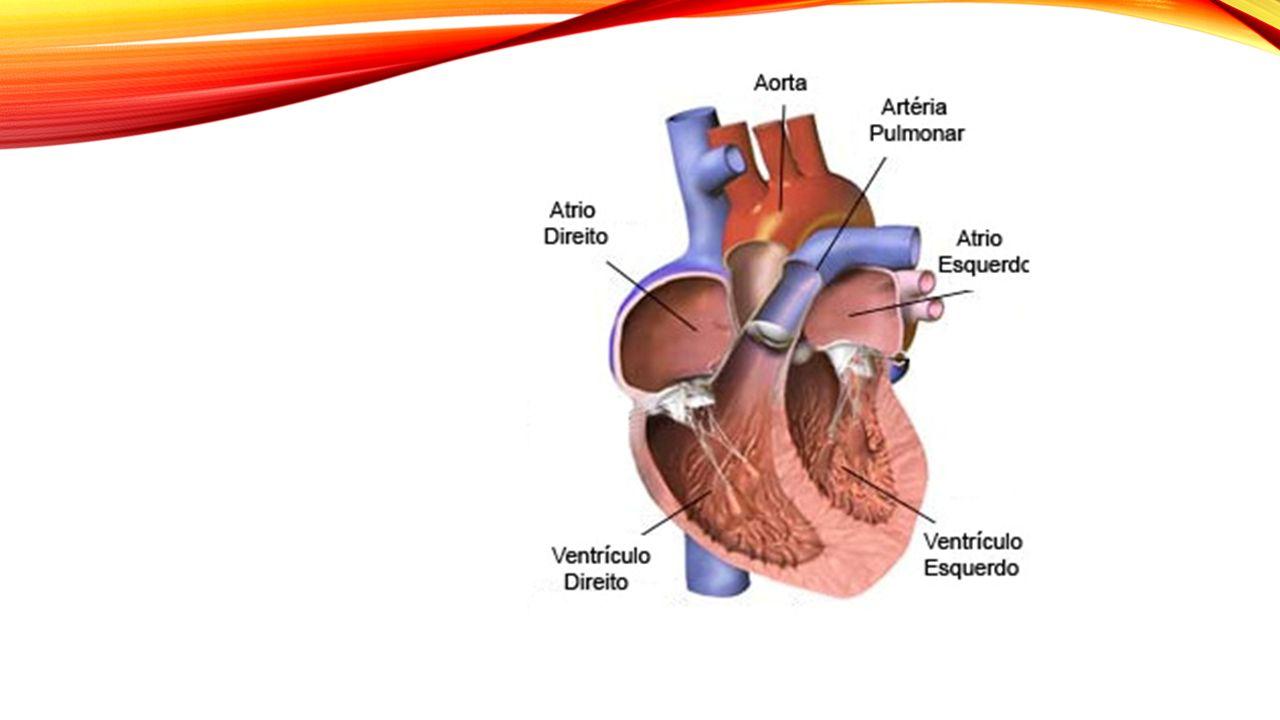 EVENTOS A força cardíaca se resume basicamente na contração dos ventrículos VENTRÍCULO ESQUERDO