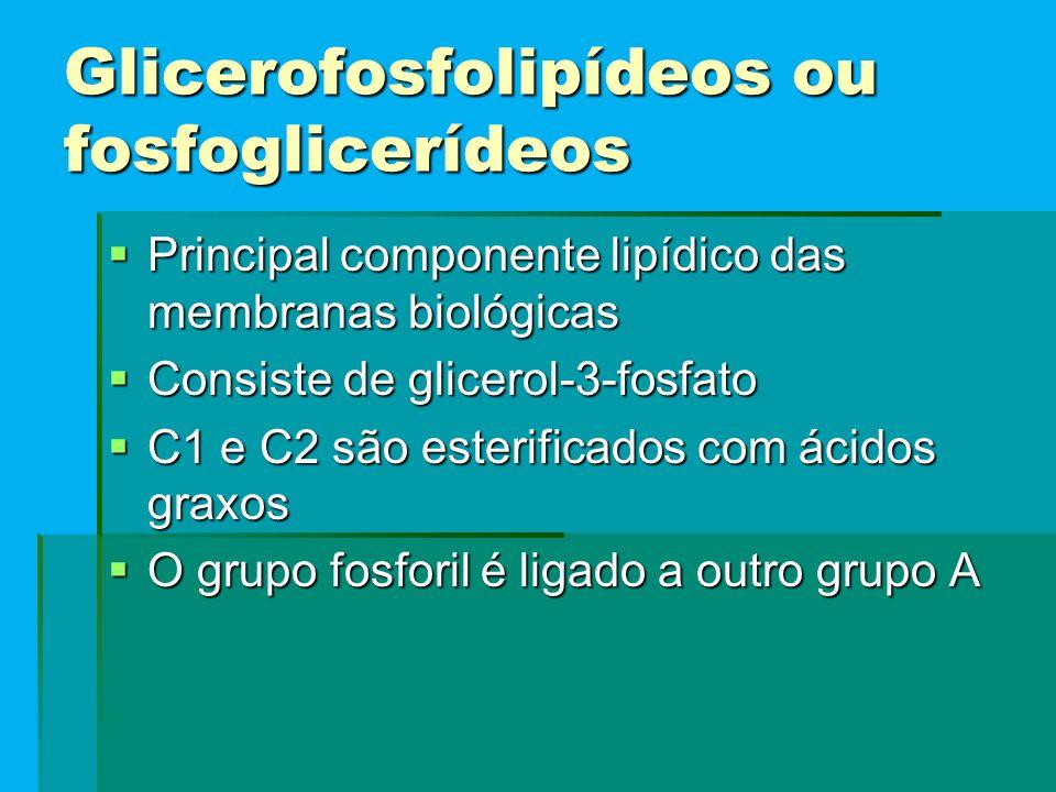 Glicerofosfolipídeos ou fosfoglicerídeos  Principal componente lipídico das membranas biológicas  Consiste de glicerol-3-fosfato  C1 e C2 são ester