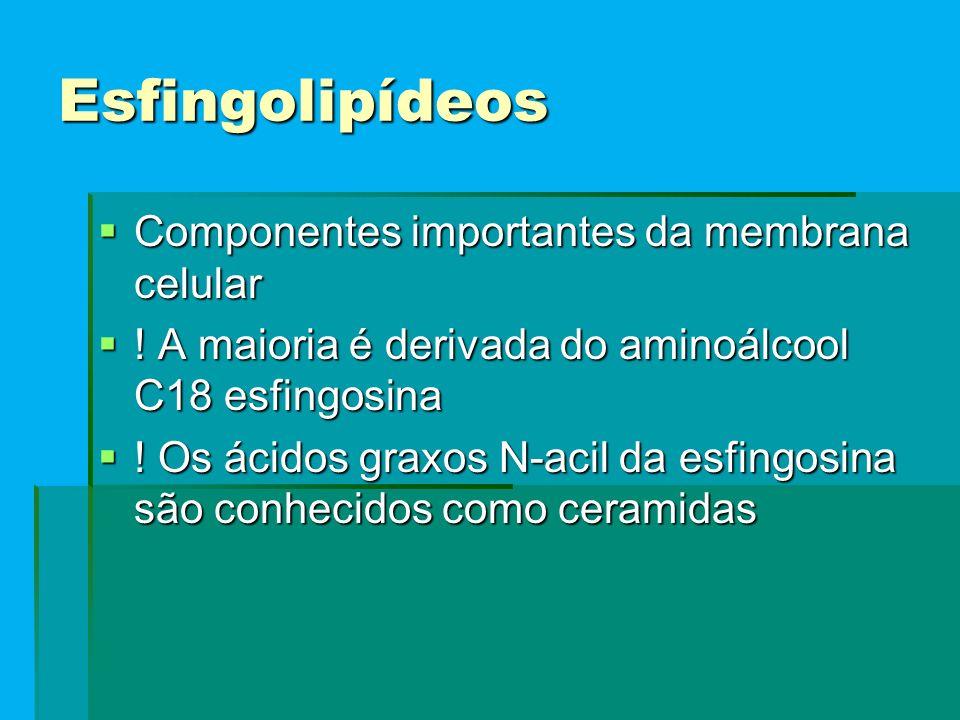 Esfingolipídeos  Componentes importantes da membrana celular  .