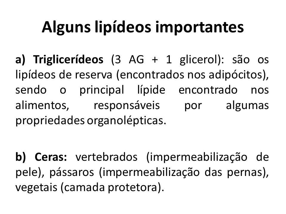 c) Fosfolipídeos (2 AG + 1 glicerol + fósforo): lipídeos constituintes das membranas celulares.