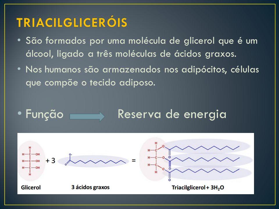 São formados por uma molécula de glicerol que é um álcool, ligado a três moléculas de ácidos graxos. Nos humanos são armazenados nos adipócitos, célul