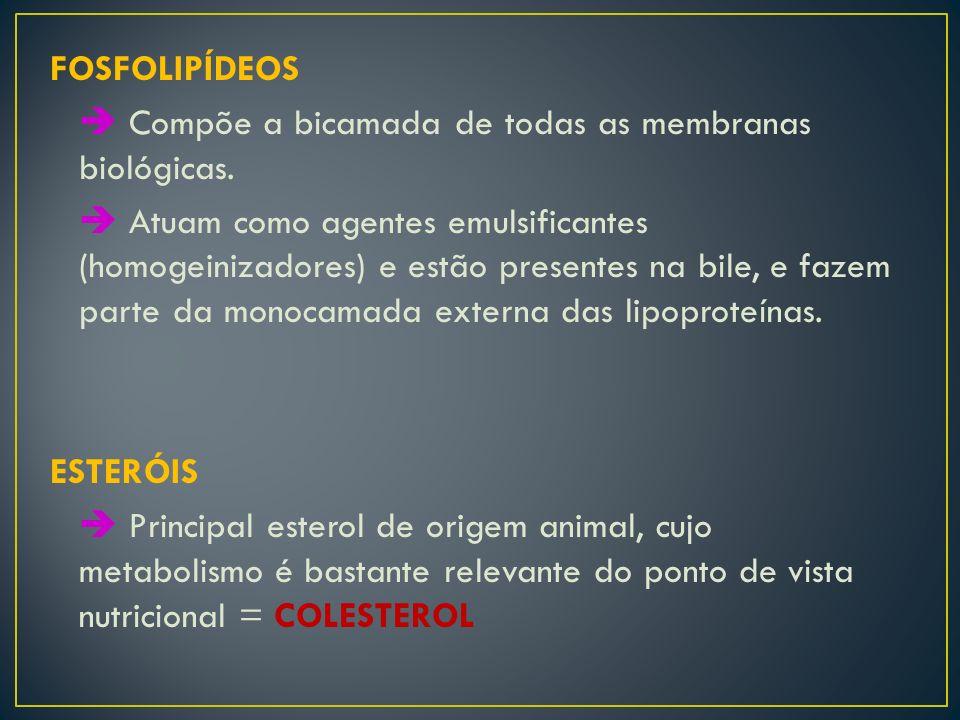 FOSFOLIPÍDEOS  Compõe a bicamada de todas as membranas biológicas.  Atuam como agentes emulsificantes (homogeinizadores) e estão presentes na bile,