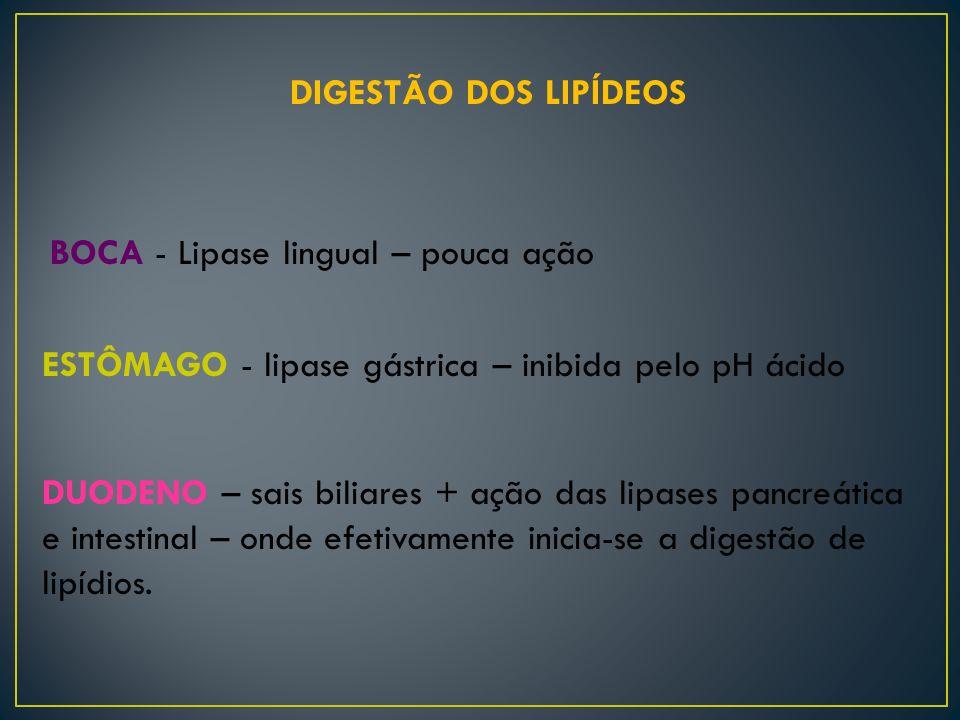 DIGESTÃO DOS LIPÍDEOS BOCA - Lipase lingual – pouca ação ESTÔMAGO - lipase gástrica – inibida pelo pH ácido DUODENO – sais biliares + ação das lipases