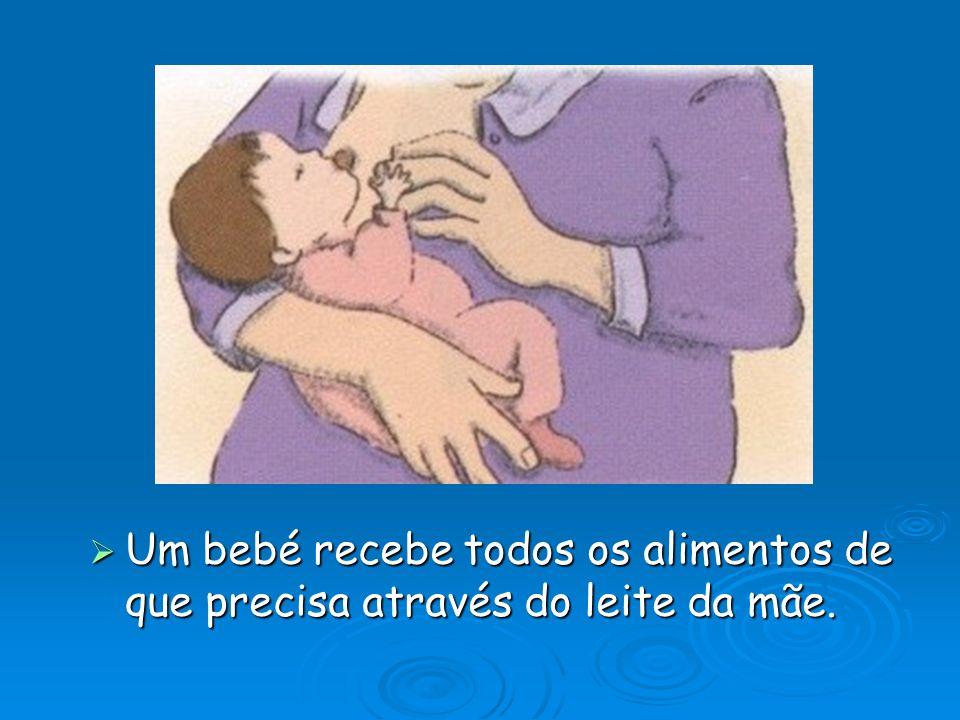  Um bebé recebe todos os alimentos de que precisa através do leite da mãe.