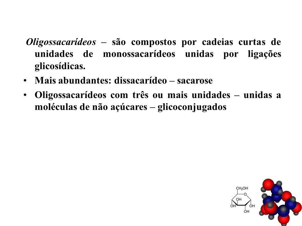 Oligossacarídeos – são compostos por cadeias curtas de unidades de monossacarídeos unidas por ligações glicosídicas. Mais abundantes: dissacarídeo – s