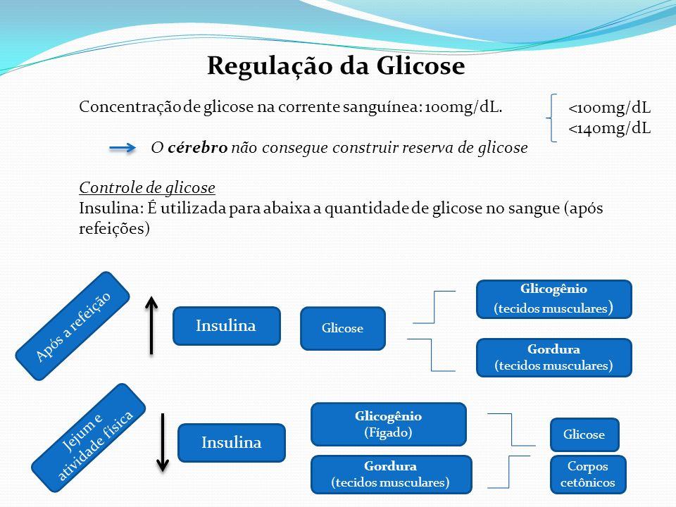 Regulação da Glicose Concentração de glicose na corrente sanguínea: 100mg/dL. O cérebro não consegue construir reserva de glicose Controle de glicose