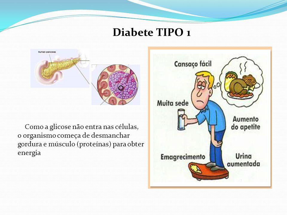 Diabete TIPO 1 Como a glicose não entra nas células, o organismo começa de desmanchar gordura e músculo (proteínas) para obter energia