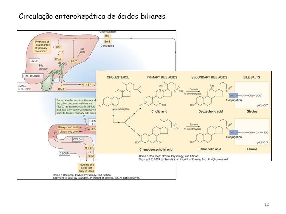 Circulação enterohepática de ácidos biliares 12