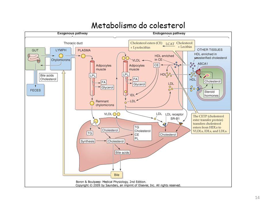 Metabolismo do colesterol 14