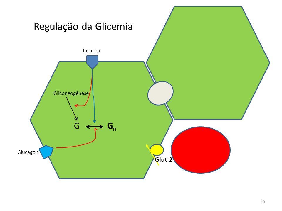 Regulação da Glicemia 15 G G n Gliconeogênese Insulina Glucagon Glut 2