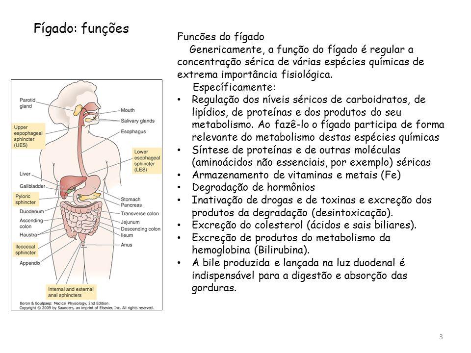 Fígado: funções Funcões do fígado Genericamente, a função do fígado é regular a concentração sérica de várias espécies químicas de extrema importância fisiológica.