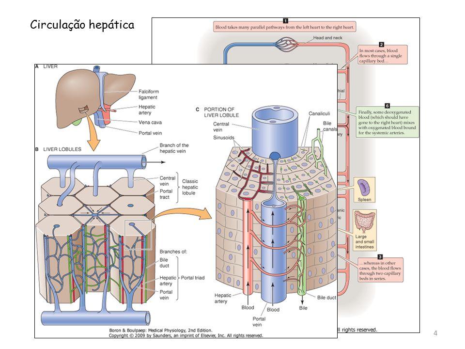 Circulação hepática 4