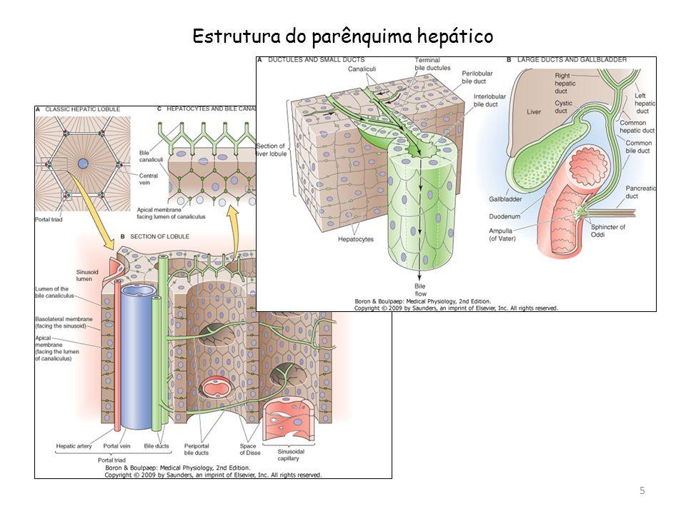 Estrutura do parênquima hepático 5