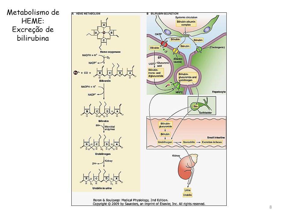 Metabolismo de HEME: Excreção de bilirubina 8