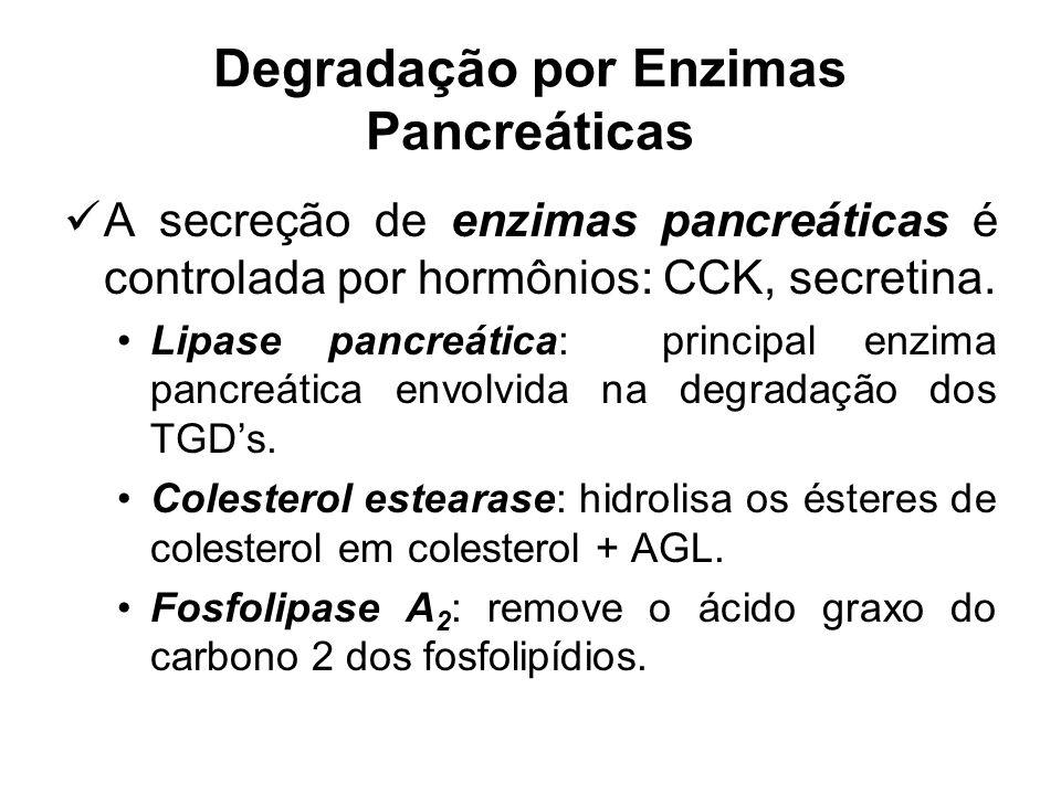Degradação por Enzimas Pancreáticas A secreção de enzimas pancreáticas é controlada por hormônios: CCK, secretina. Lipase pancreática: principal enzim
