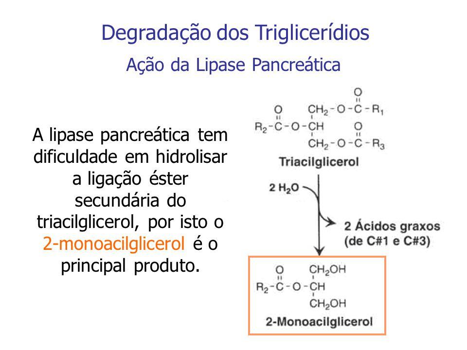 Degradação dos Triacilgliceróis Ação da Isomerase A isomerização é um processo lento, por isto menos de ¼ dos triacilgliceróis é hidrolizado a glicerol e ácidos graxos livres CH 2 - OH CH CH 2 - OH O CH 3 - C - O - CH CH 2 - OH O CH 3 - C - O - 2-Monoacilglicerol1-Monoacilglicerol Lipase Pancreática Isomerase Glicerol + Ácido graxo