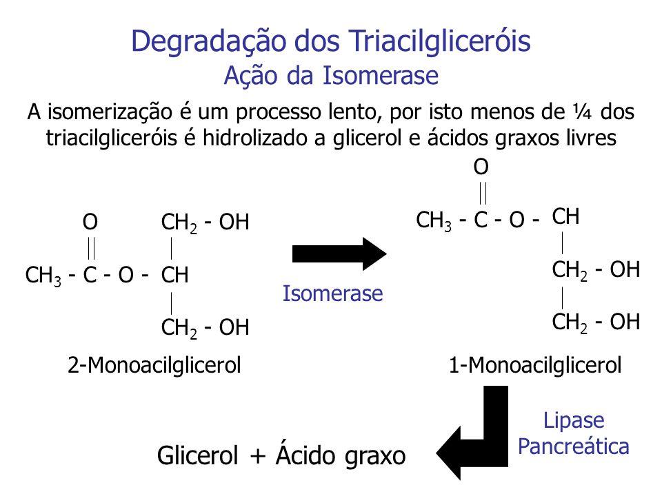 Degradação dos Triacilgliceróis Ação da Isomerase A isomerização é um processo lento, por isto menos de ¼ dos triacilgliceróis é hidrolizado a glicero