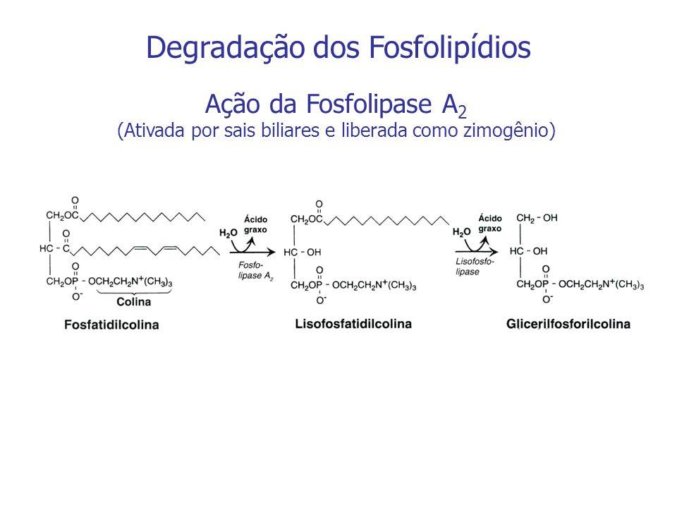 Degradação dos Fosfolipídios Ação da Fosfolipase A 2 (Ativada por sais biliares e liberada como zimogênio)