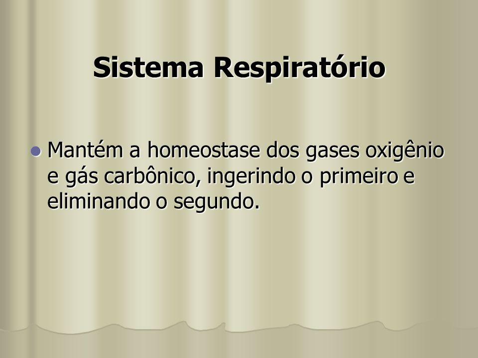 Sistema Respiratório Mantém a homeostase dos gases oxigênio e gás carbônico, ingerindo o primeiro e eliminando o segundo. Mantém a homeostase dos gase