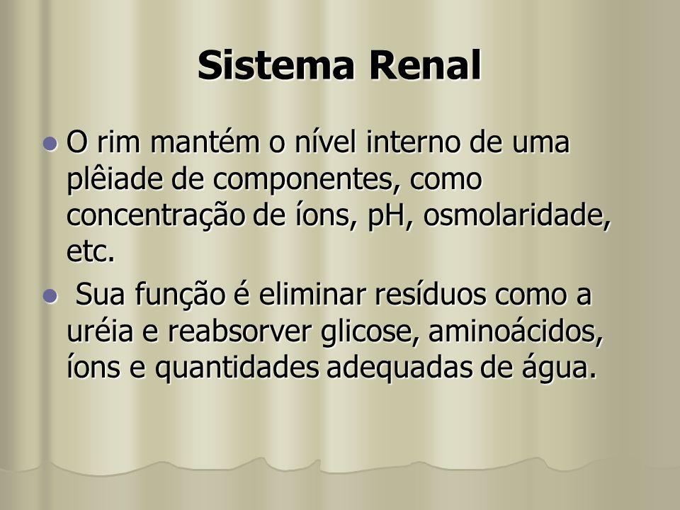 Sistema Renal O rim mantém o nível interno de uma plêiade de componentes, como concentração de íons, pH, osmolaridade, etc. O rim mantém o nível inter