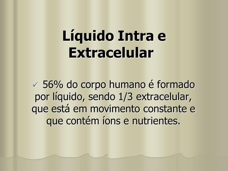 Líquido Intra e Extracelular 56% do corpo humano é formado por líquido, sendo 1/3 extracelular, que está em movimento constante e que contém íons e nu