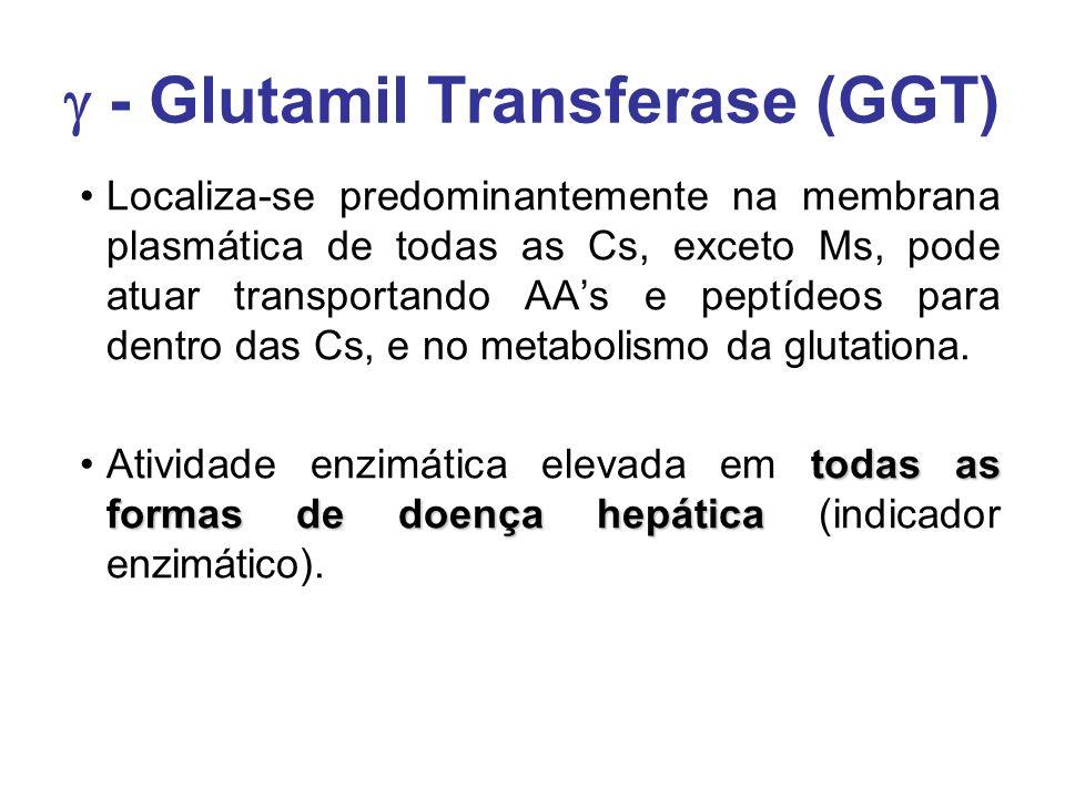  - Glutamil Transferase (GGT) Localiza-se predominantemente na membrana plasmática de todas as Cs, exceto Ms, pode atuar transportando AA's e peptíde
