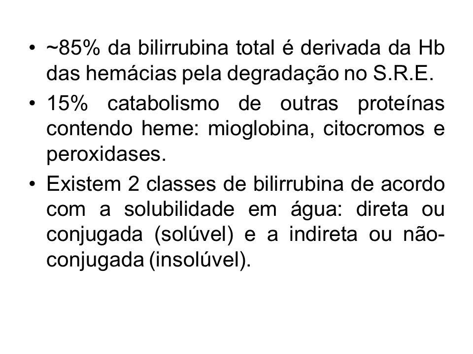 ~85% da bilirrubina total é derivada da Hb das hemácias pela degradação no S.R.E. 15% catabolismo de outras proteínas contendo heme: mioglobina, citoc