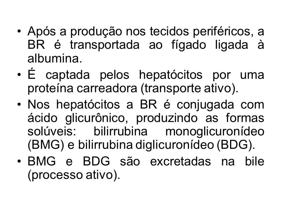 Após a produção nos tecidos periféricos, a BR é transportada ao fígado ligada à albumina. É captada pelos hepatócitos por uma proteína carreadora (tra