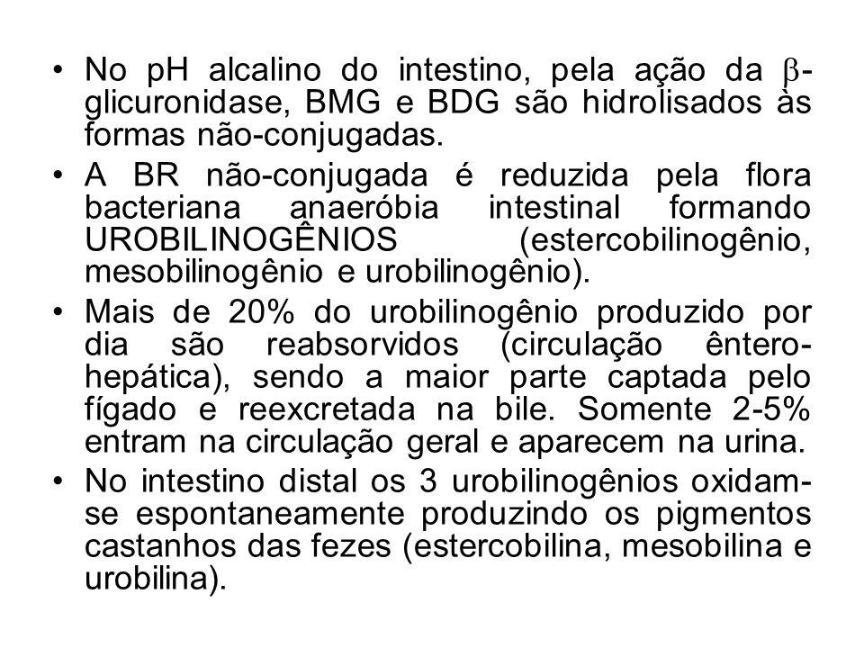 No pH alcalino do intestino, pela ação da  - glicuronidase, BMG e BDG são hidrolisados às formas não-conjugadas. A BR não-conjugada é reduzida pela f
