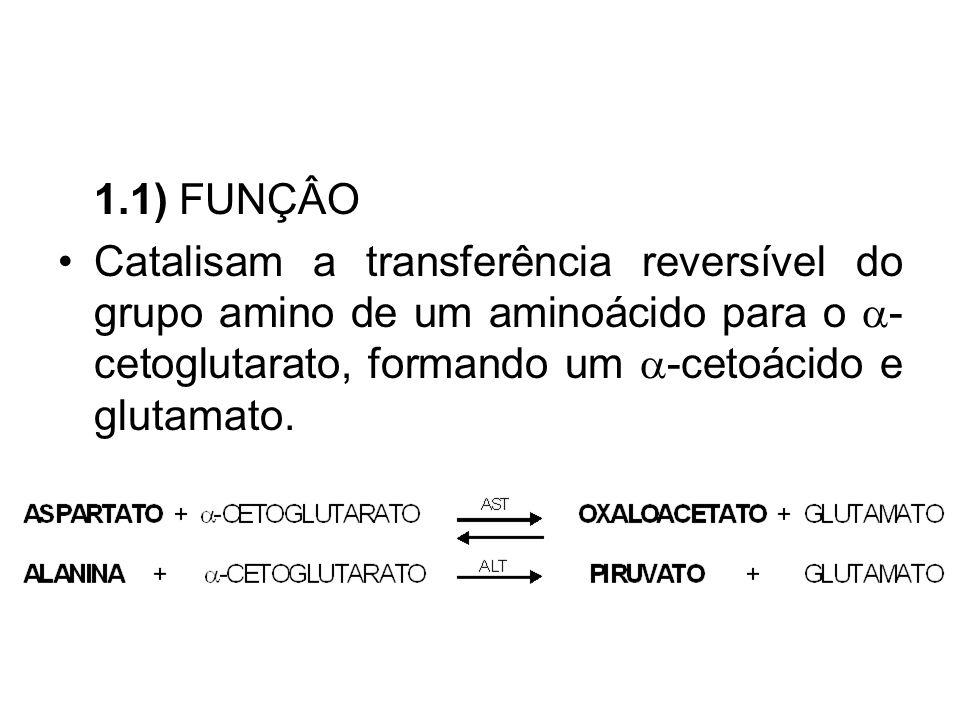 1.1) FUNÇÂO Catalisam a transferência reversível do grupo amino de um aminoácido para o  - cetoglutarato, formando um  -cetoácido e glutamato.