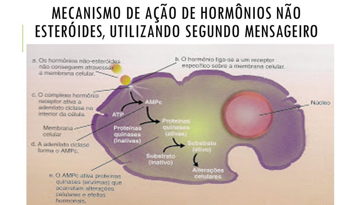 MECANISMO DE AÇÃO DE HORMÔNIOS NÃO ESTERÓIDES, UTILIZANDO SEGUNDO MENSAGEIRO
