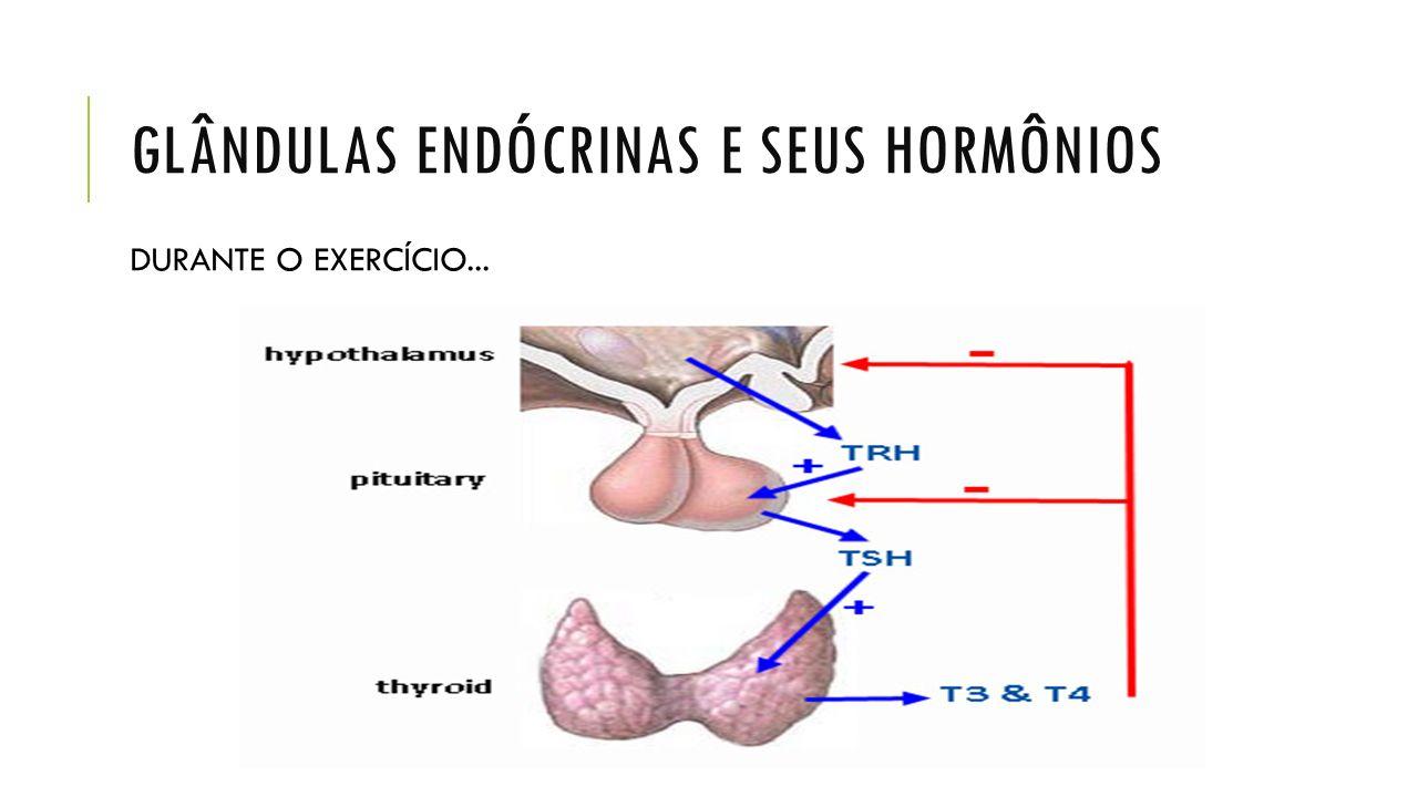 GLÂNDULAS ENDÓCRINAS E SEUS HORMÔNIOS DURANTE O EXERCÍCIO...