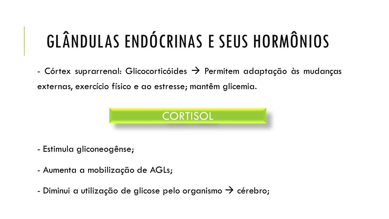 GLÂNDULAS ENDÓCRINAS E SEUS HORMÔNIOS - Córtex suprarrenal: Glicocorticóides  Permitem adaptação às mudanças externas, exercício físico e ao estresse; mantêm glicemia.