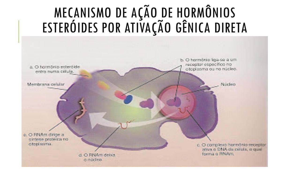 GLÂNDULAS ENDÓCRINAS E SEUS HORMÔNIOS  HIPÓFISE - GH: Hormônio do crescimento Potente agente anabólico Crescimento e hipertrofia dos músculos, pois facilita o transporte de aminoácidos para o interior da célula.