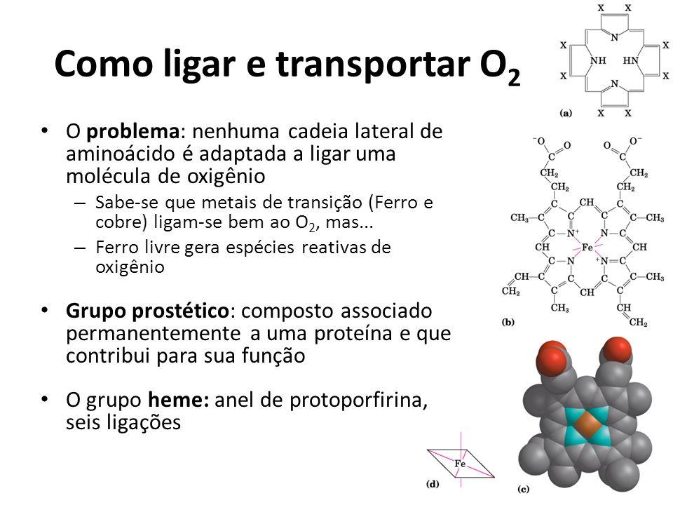 Como ligar e transportar O 2 O problema: nenhuma cadeia lateral de aminoácido é adaptada a ligar uma molécula de oxigênio – Sabe-se que metais de tran