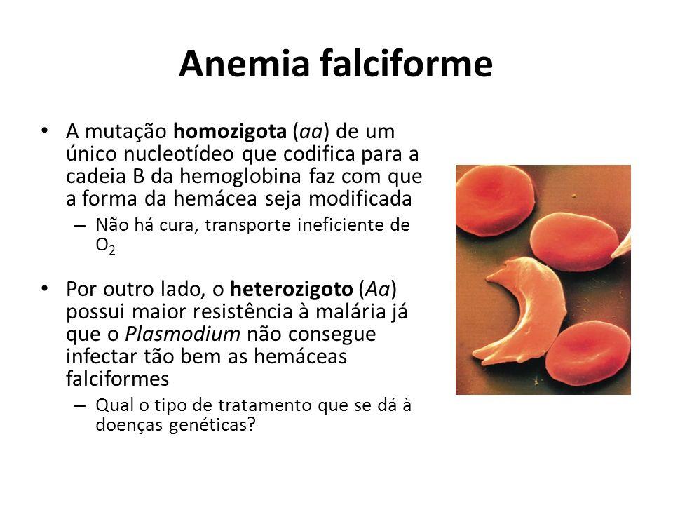 Anemia falciforme A mutação homozigota (aa) de um único nucleotídeo que codifica para a cadeia B da hemoglobina faz com que a forma da hemácea seja mo