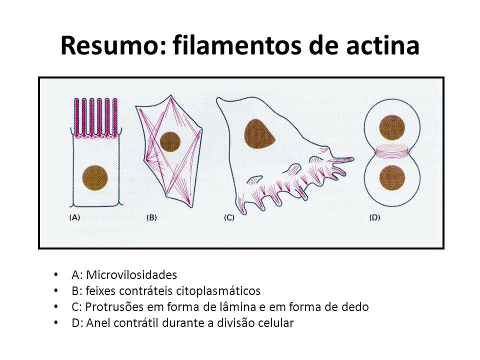 Resumo: filamentos de actina A: Microvilosidades B: feixes contráteis citoplasmáticos C: Protrusões em forma de lâmina e em forma de dedo D: Anel cont
