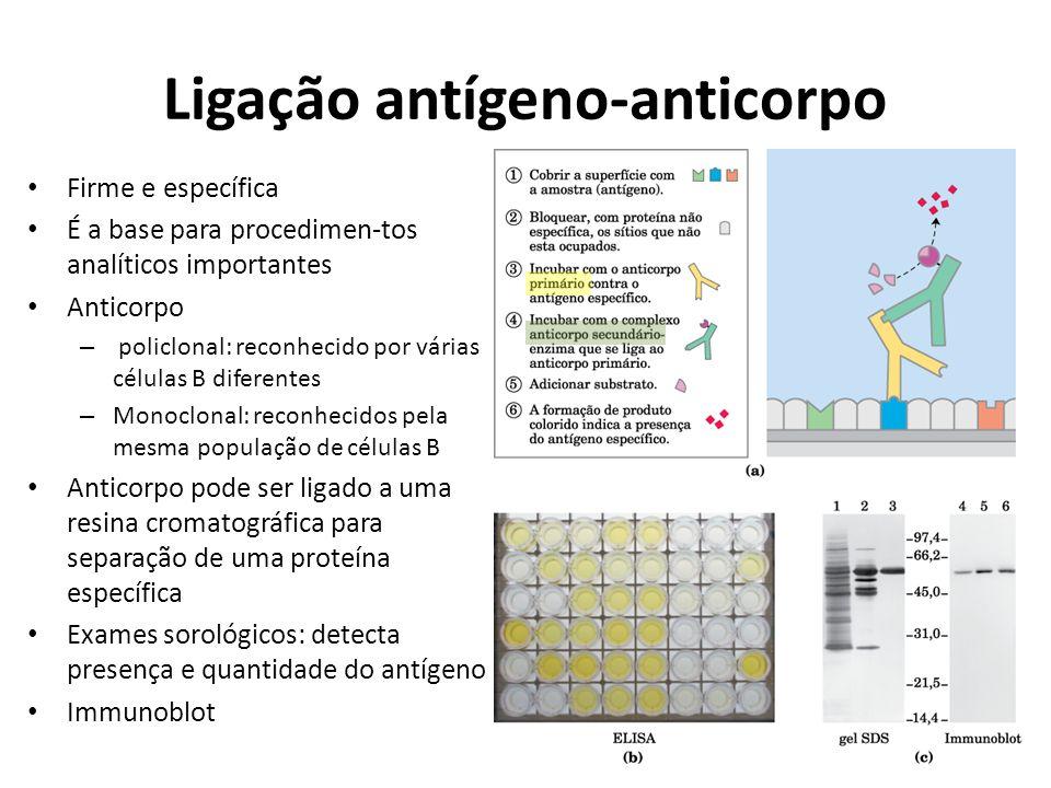 Ligação antígeno-anticorpo Firme e específica É a base para procedimen-tos analíticos importantes Anticorpo – policlonal: reconhecido por várias célul
