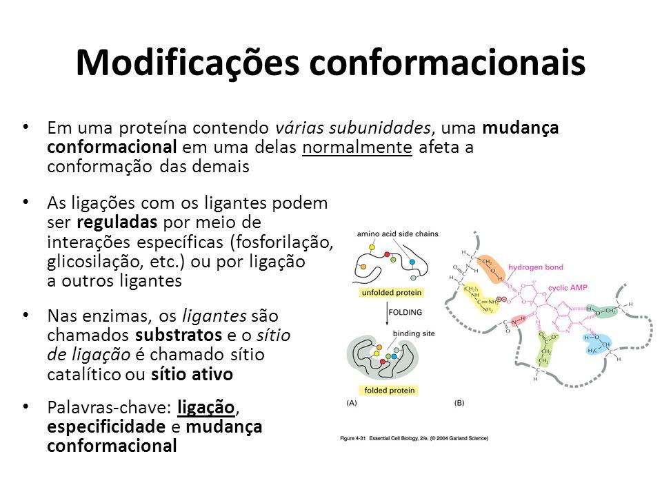 Modificações conformacionais Em uma proteína contendo várias subunidades, uma mudança conformacional em uma delas normalmente afeta a conformação das
