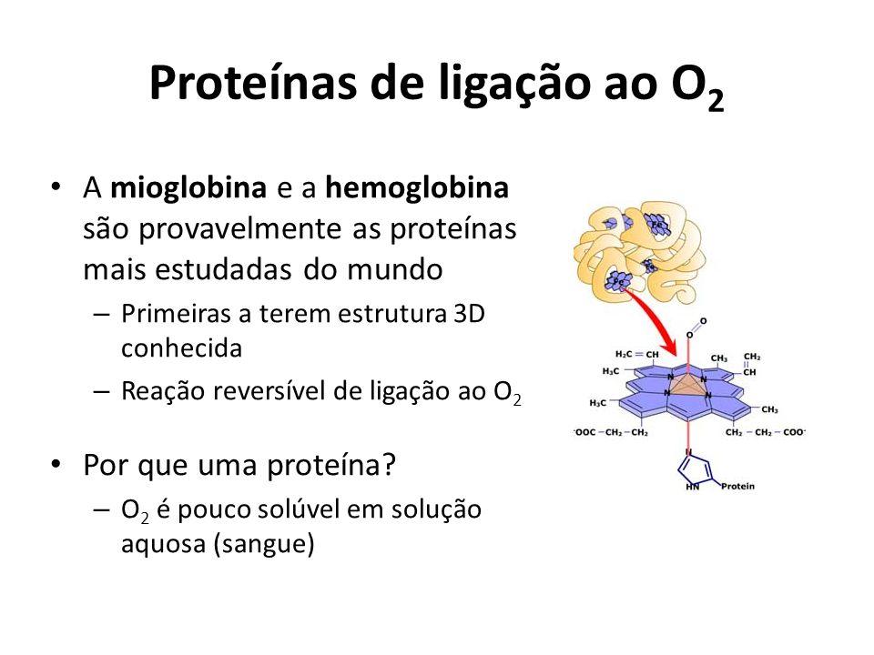 Proteínas de ligação ao O 2 A mioglobina e a hemoglobina são provavelmente as proteínas mais estudadas do mundo – Primeiras a terem estrutura 3D conhe