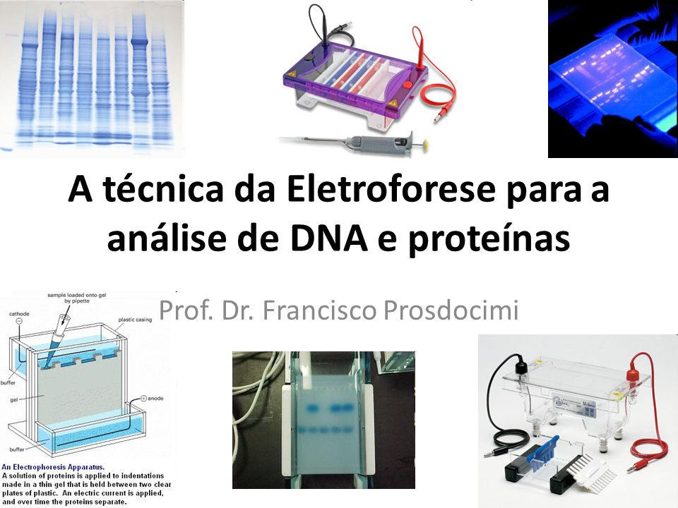 A técnica da Eletroforese para a análise de DNA e proteínas Prof. Dr. Francisco Prosdocimi