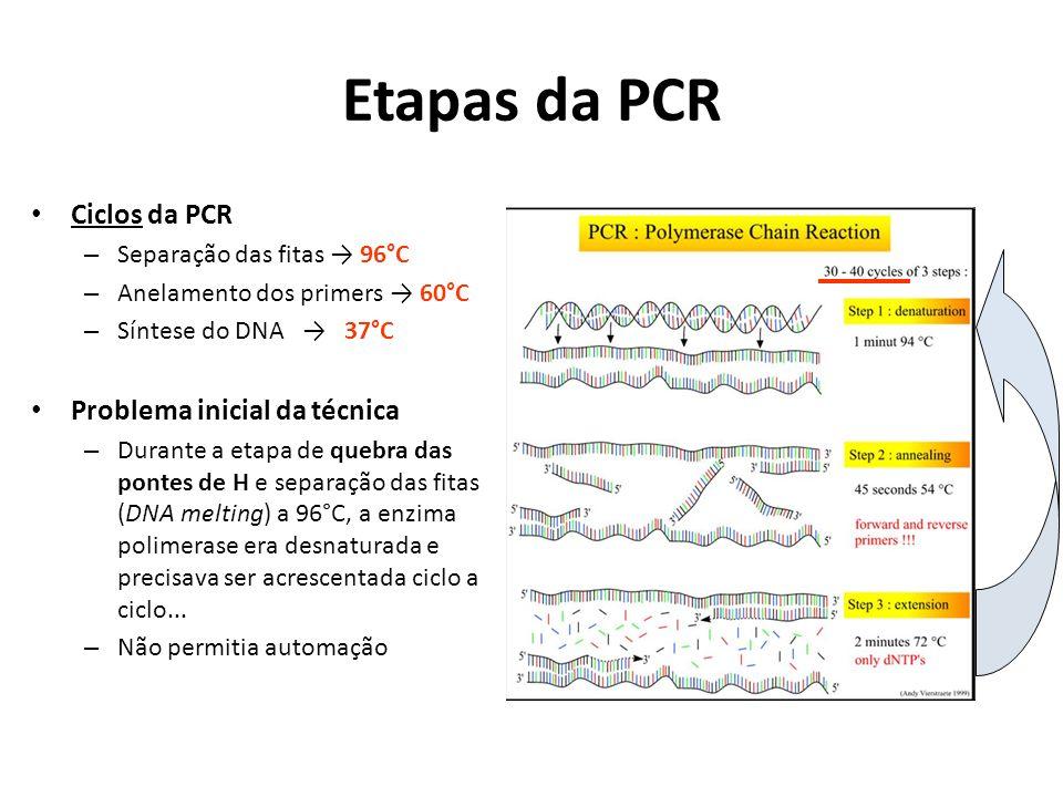 Etapas da PCR Ciclos da PCR – Separação das fitas 96°C – Anelamento dos primers 60°C – Síntese do DNA 37°C Problema inicial da técnica – Durante a etapa de quebra das pontes de H e separação das fitas (DNA melting) a 96°C, a enzima polimerase era desnaturada e precisava ser acrescentada ciclo a ciclo...