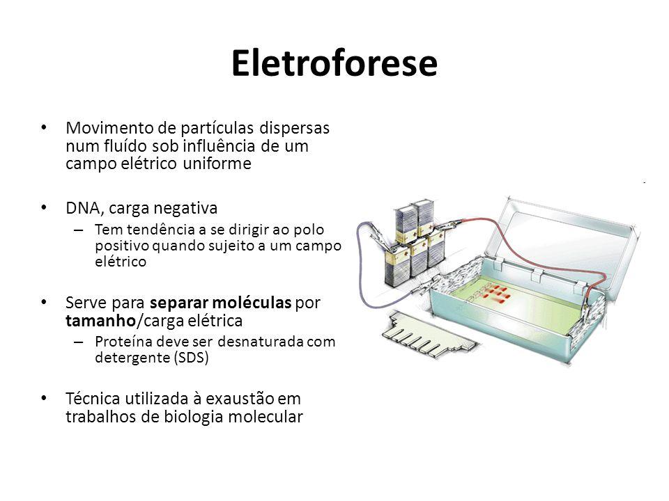 Eletroforese Movimento de partículas dispersas num fluído sob influência de um campo elétrico uniforme DNA, carga negativa – Tem tendência a se dirigir ao polo positivo quando sujeito a um campo elétrico Serve para separar moléculas por tamanho/carga elétrica – Proteína deve ser desnaturada com detergente (SDS) Técnica utilizada à exaustão em trabalhos de biologia molecular