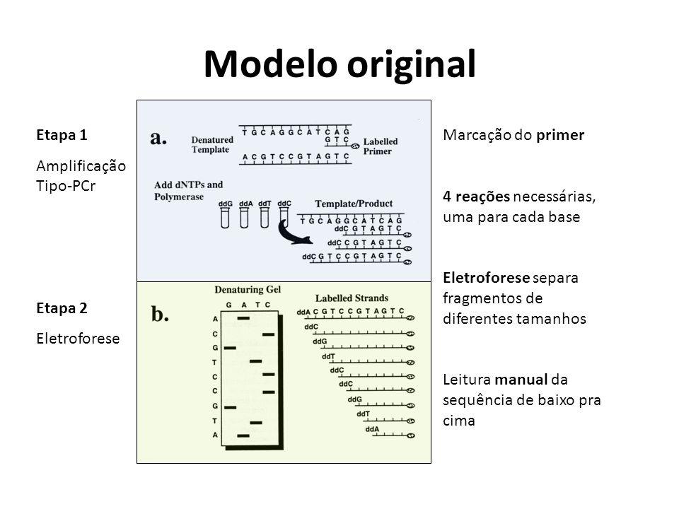 Modelo original Marcação do primer 4 reações necessárias, uma para cada base Eletroforese separa fragmentos de diferentes tamanhos Leitura manual da sequência de baixo pra cima Etapa 1 Amplificação Tipo-PCr Etapa 2 Eletroforese