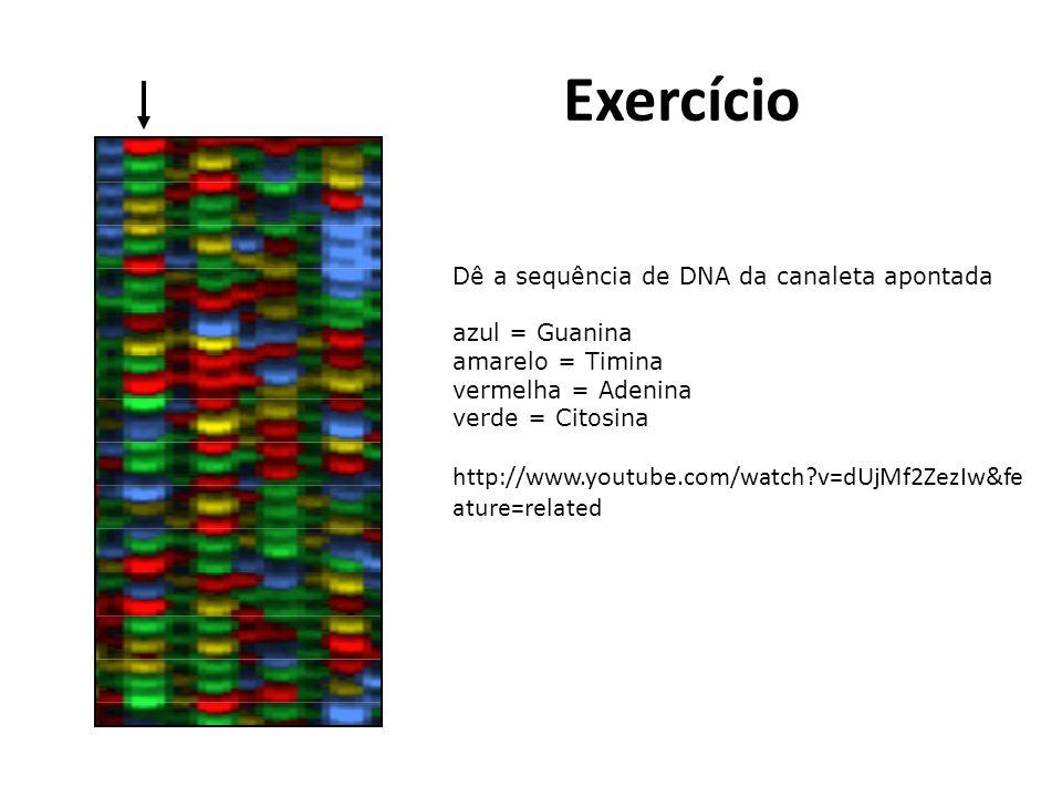 Exercício Dê a sequência de DNA da canaleta apontada azul = Guanina amarelo = Timina vermelha = Adenina verde = Citosina http://www.youtube.com/watch?v=dUjMf2ZezIw&fe ature=related