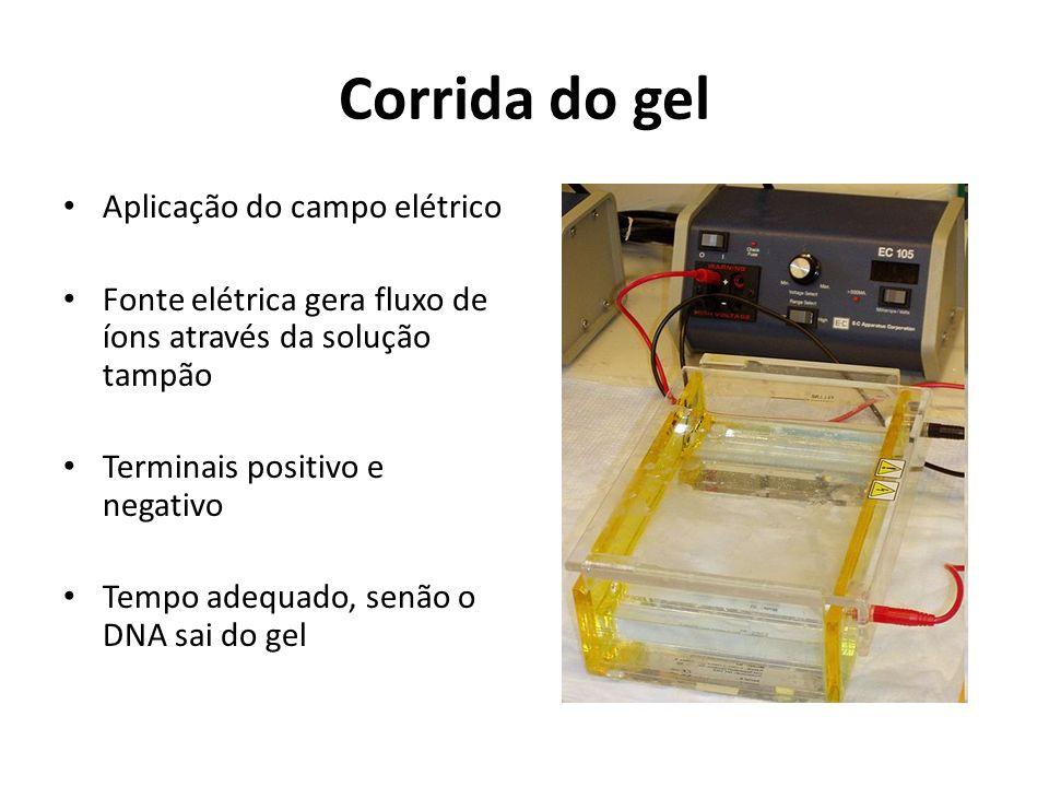 Corrida do gel Aplicação do campo elétrico Fonte elétrica gera fluxo de íons através da solução tampão Terminais positivo e negativo Tempo adequado, senão o DNA sai do gel