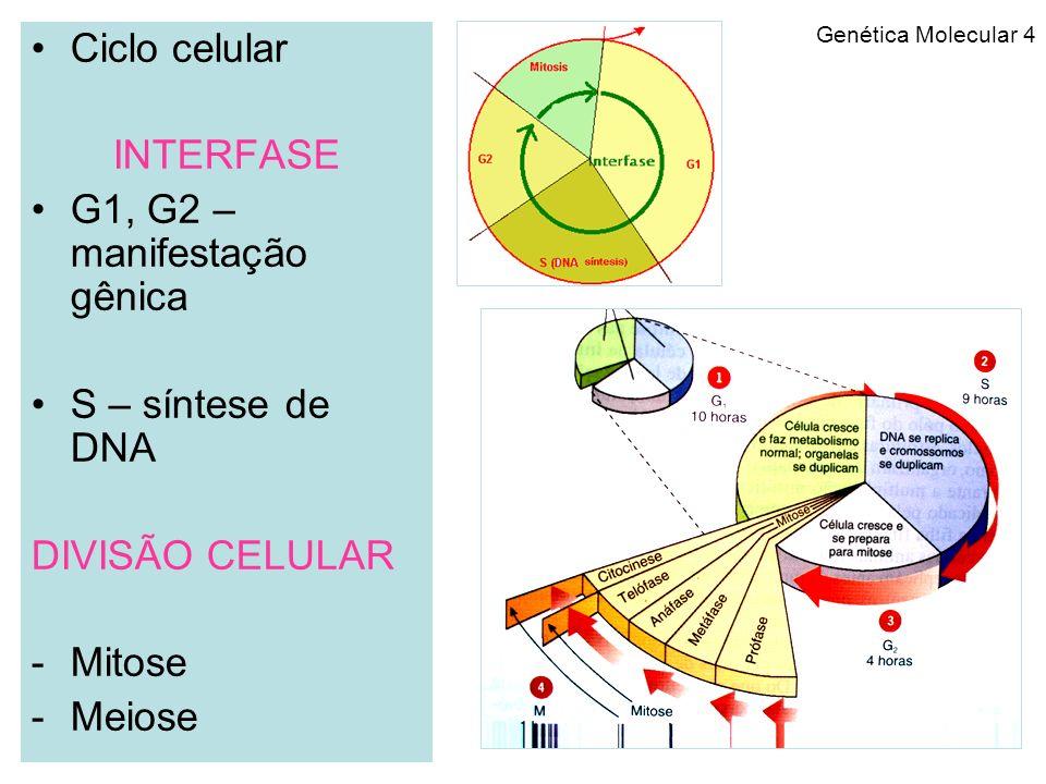 Genética Molecular 5 -Duplicação do DNA